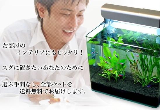 熱帯魚初心者水槽セット